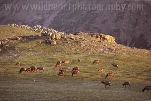 Wildlife Photo--07